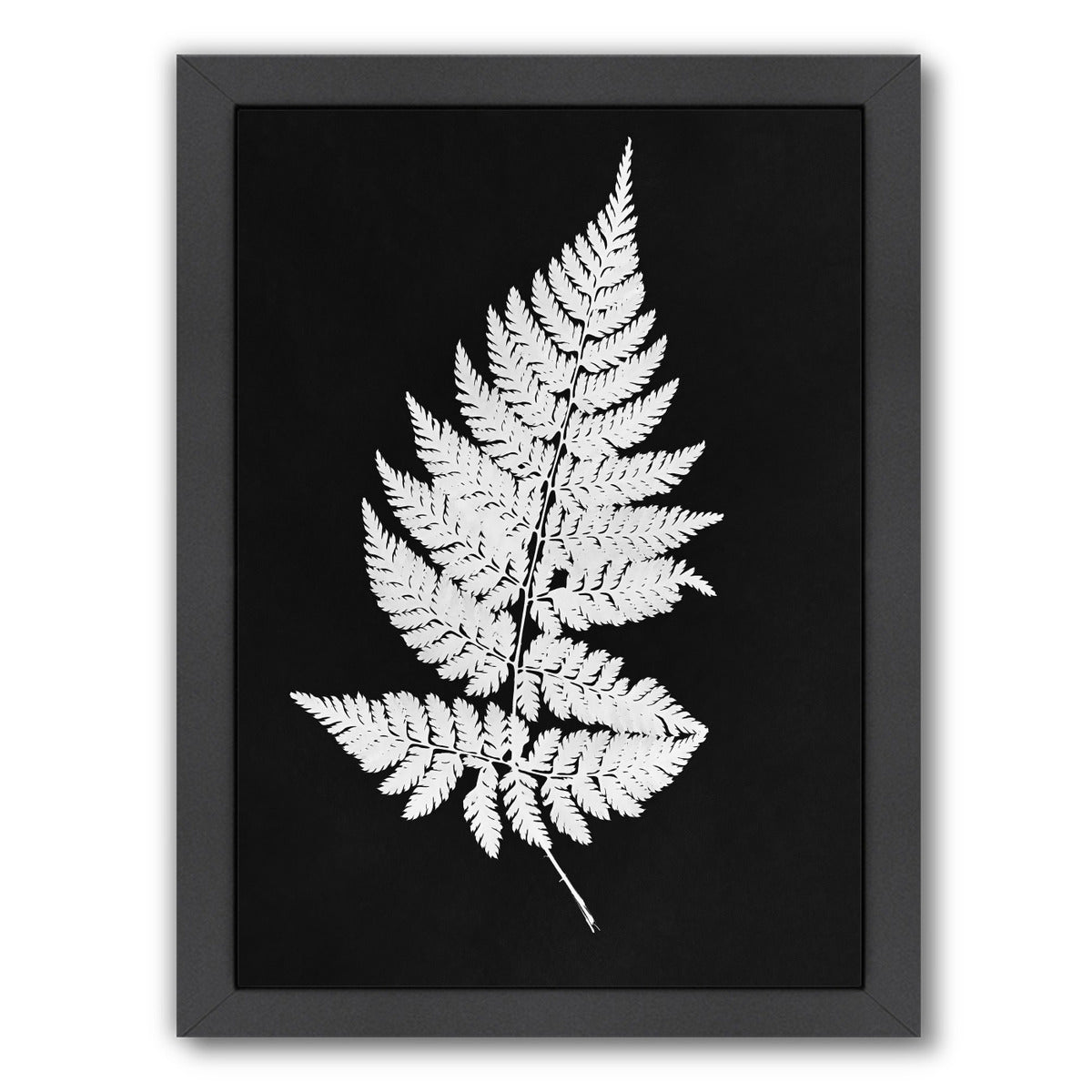 White Fern I Master Layer By Chaos & Wonder Design - Black Framed Print - Wall Art - Americanflat
