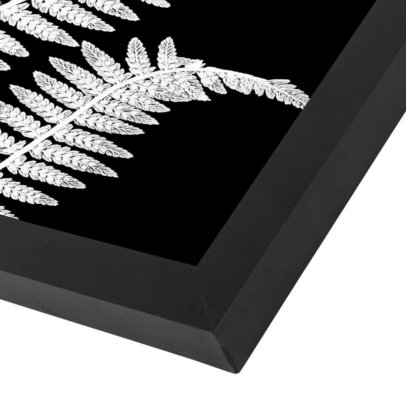 White Fern Ii By Chaos & Wonder Design - Black Framed Print - Wall Art - Americanflat