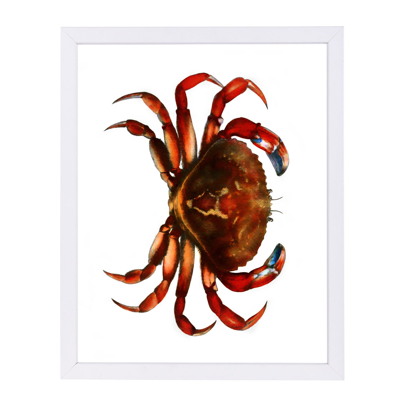 "Crab By Chaos & Wonder Design - White Framed Print, Wall Art, Chaos & Wonder Design, 8"" x 10"""