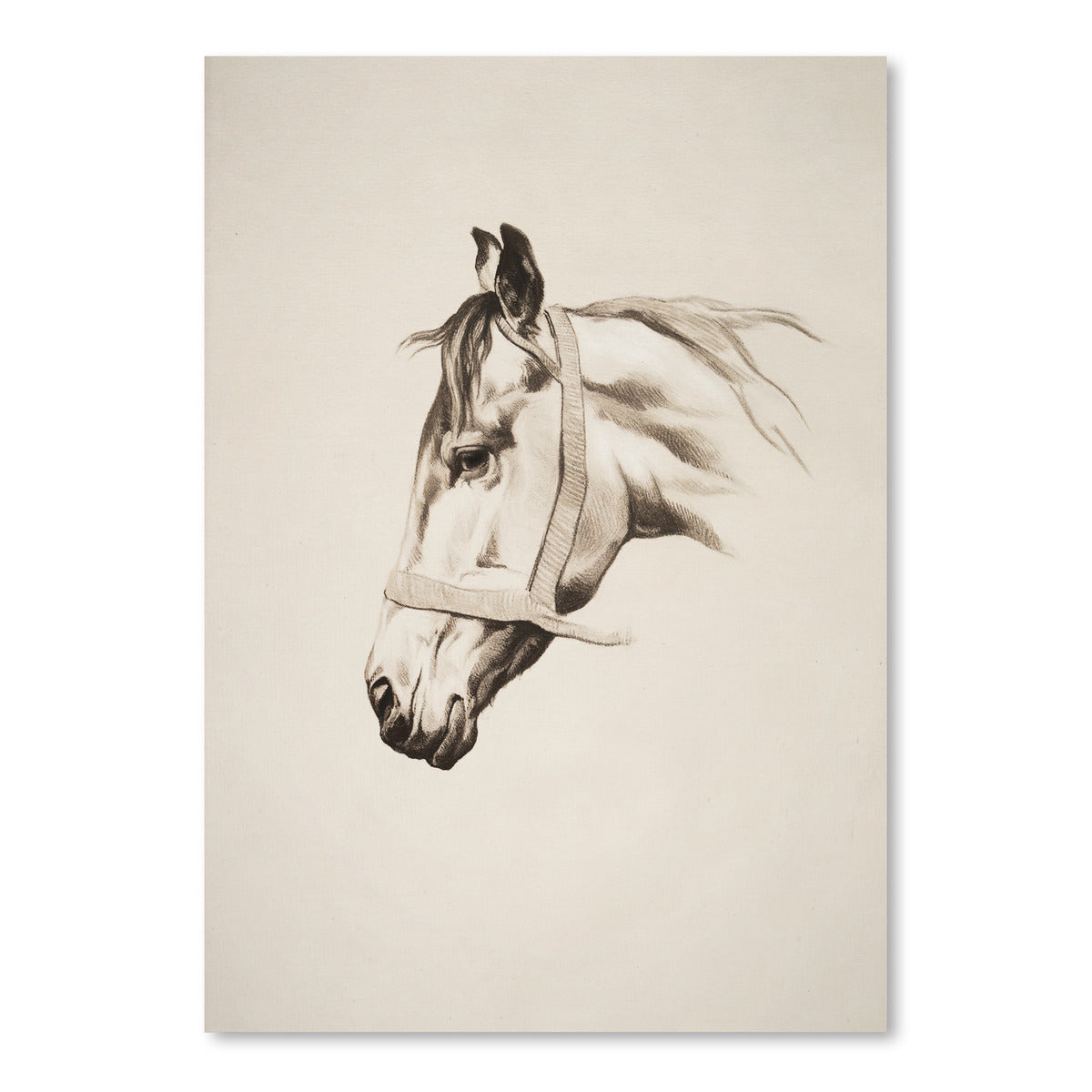 Horse Head II by Chaos & Wonder Design - Art Print - Americanflat