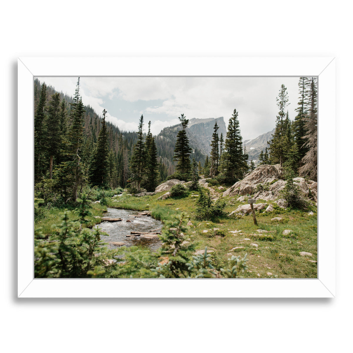 Rocky Mountain National Park By Natalie Allen - White Framed Print - Wall Art - Americanflat