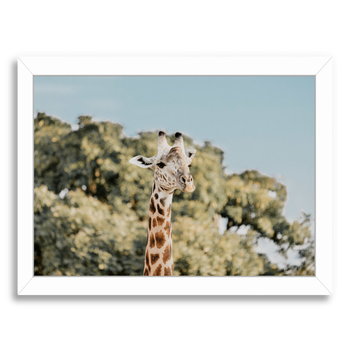 Zambia By Natalie Allen - White Framed Print - Wall Art - Americanflat