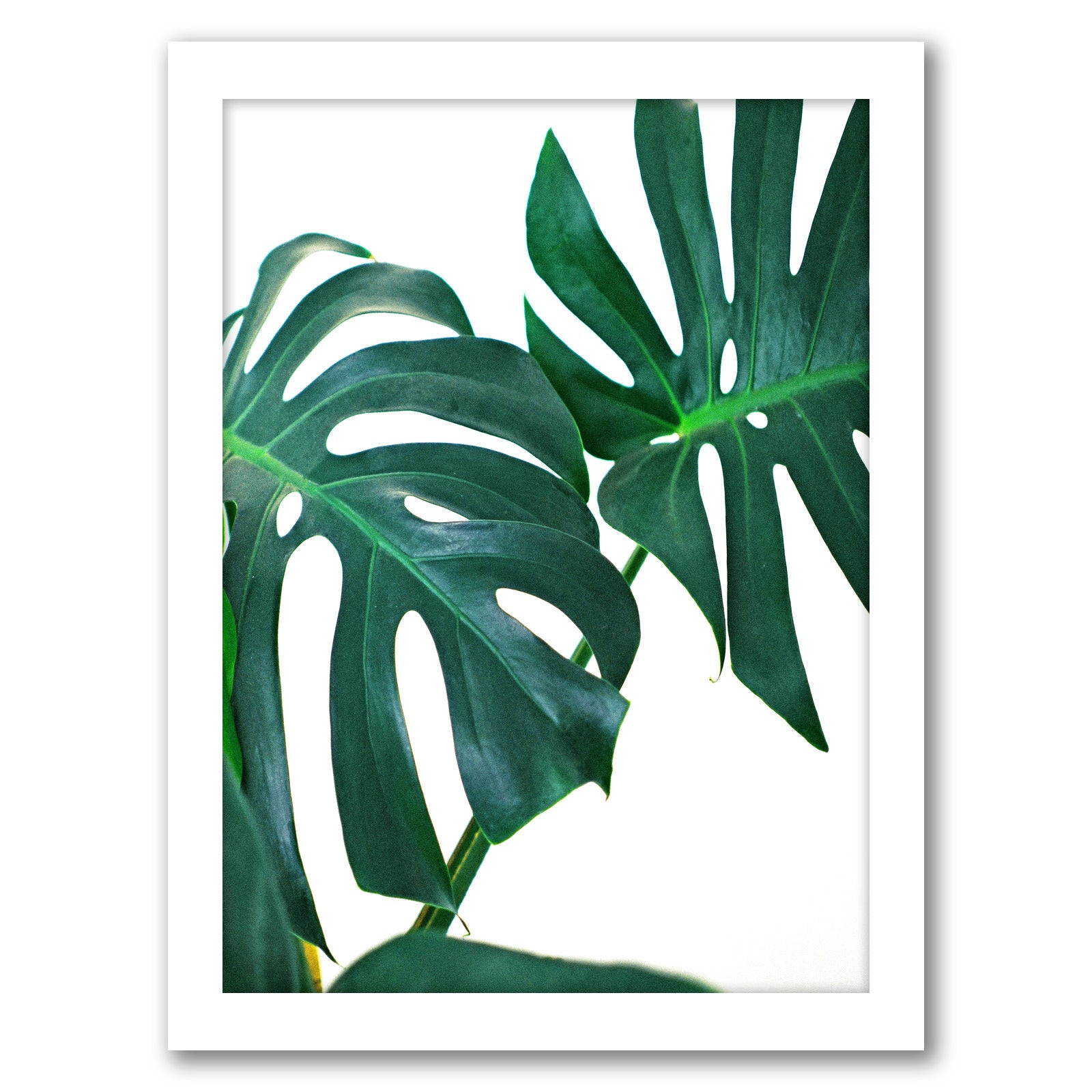Monstera Leaves by Tanya Shumkina - White Framed Print - Wall Art - Americanflat