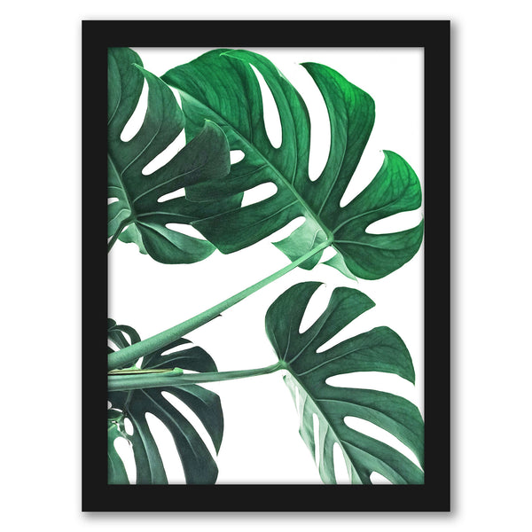 "Monstera Plant by Tanya Shumkina - Black Framed Print, Wall Art, Tanya Shumkina, 8"" x 10"""