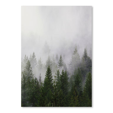 Foggy Forest by Tanya Shumkina - Art Print - Americanflat