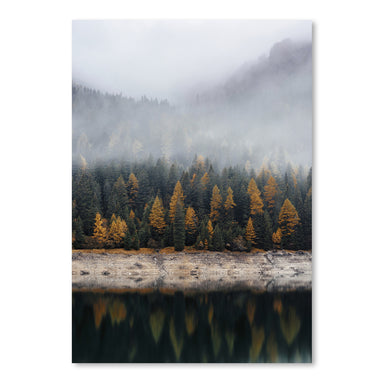 Fall Forest by Tanya Shumkina - Art Print - Americanflat
