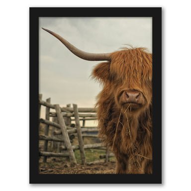 Cow Photo by Tanya Shumkina - Black Framed Print - Wall Art - Americanflat