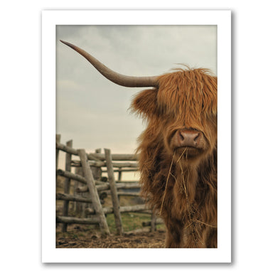 Cow Photo by Tanya Shumkina - White Framed Print - Wall Art - Americanflat
