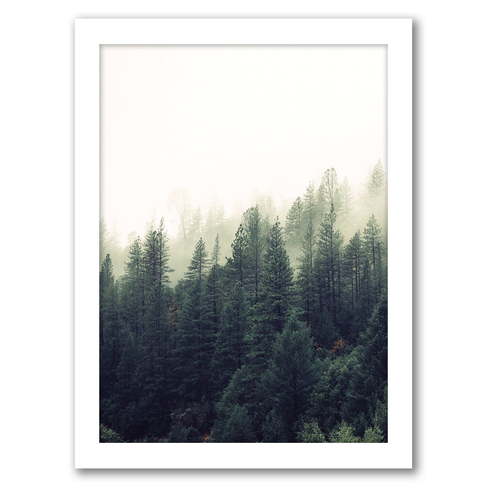 Forest Art by Tanya Shumkina - White Framed Print - Wall Art - Americanflat