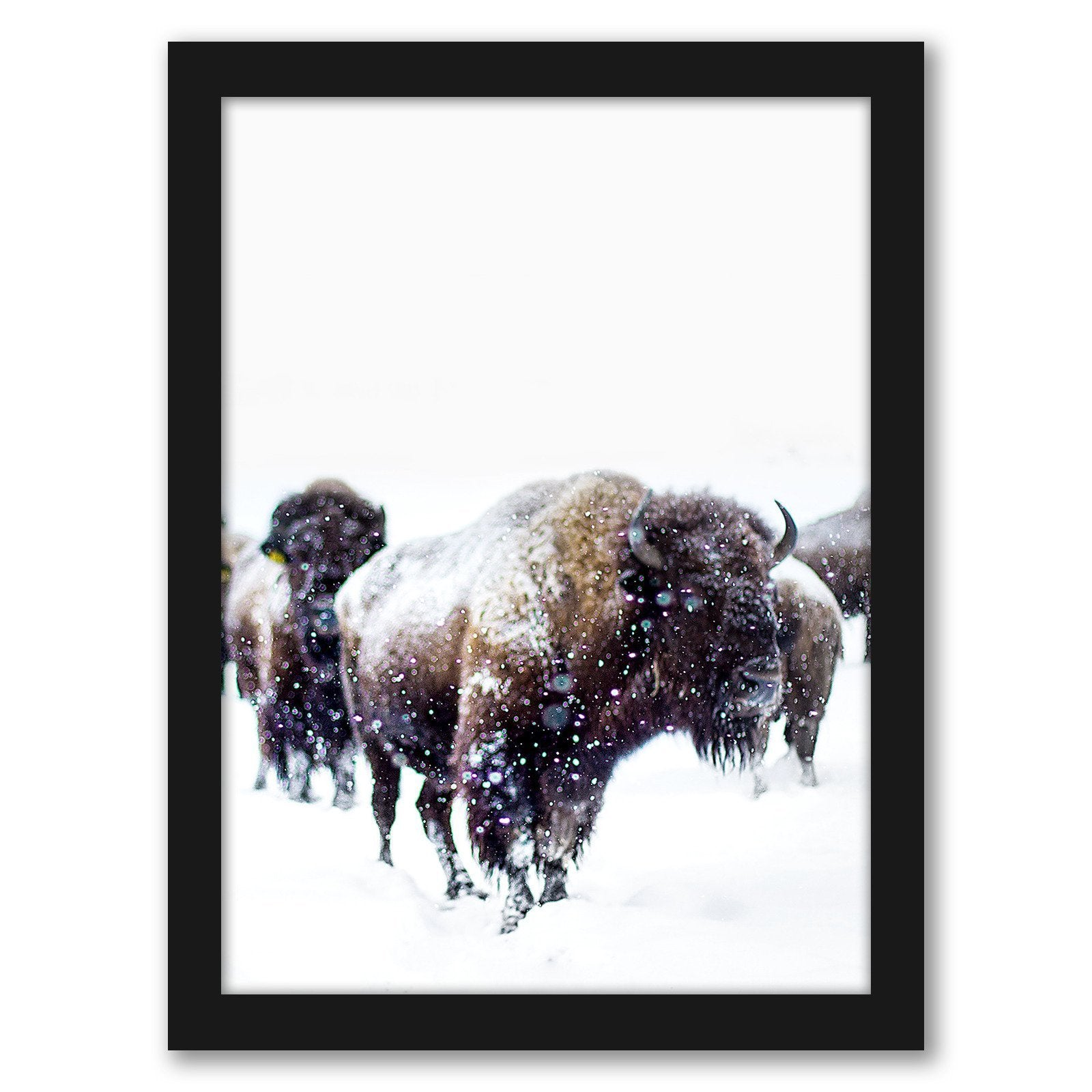 Bison by Tanya Shumkina - Black Framed Print - Wall Art - Americanflat
