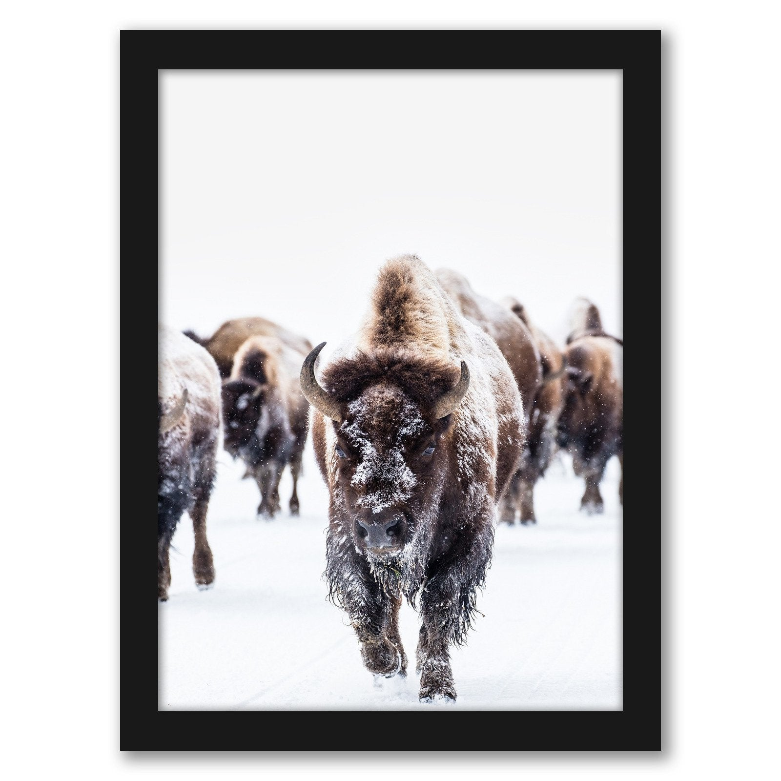 Bison Wall Art by Tanya Shumkina - Black Framed Print - Wall Art - Americanflat