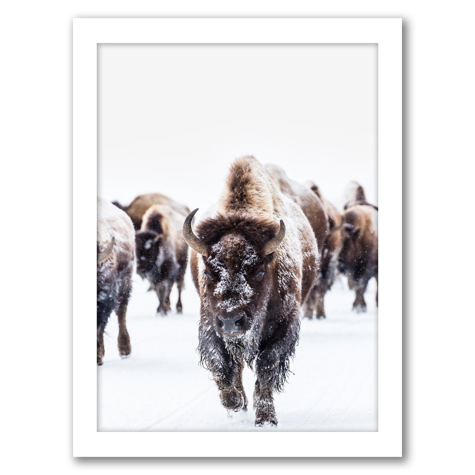 Bison Wall Art by Tanya Shumkina - Framed Print - Americanflat