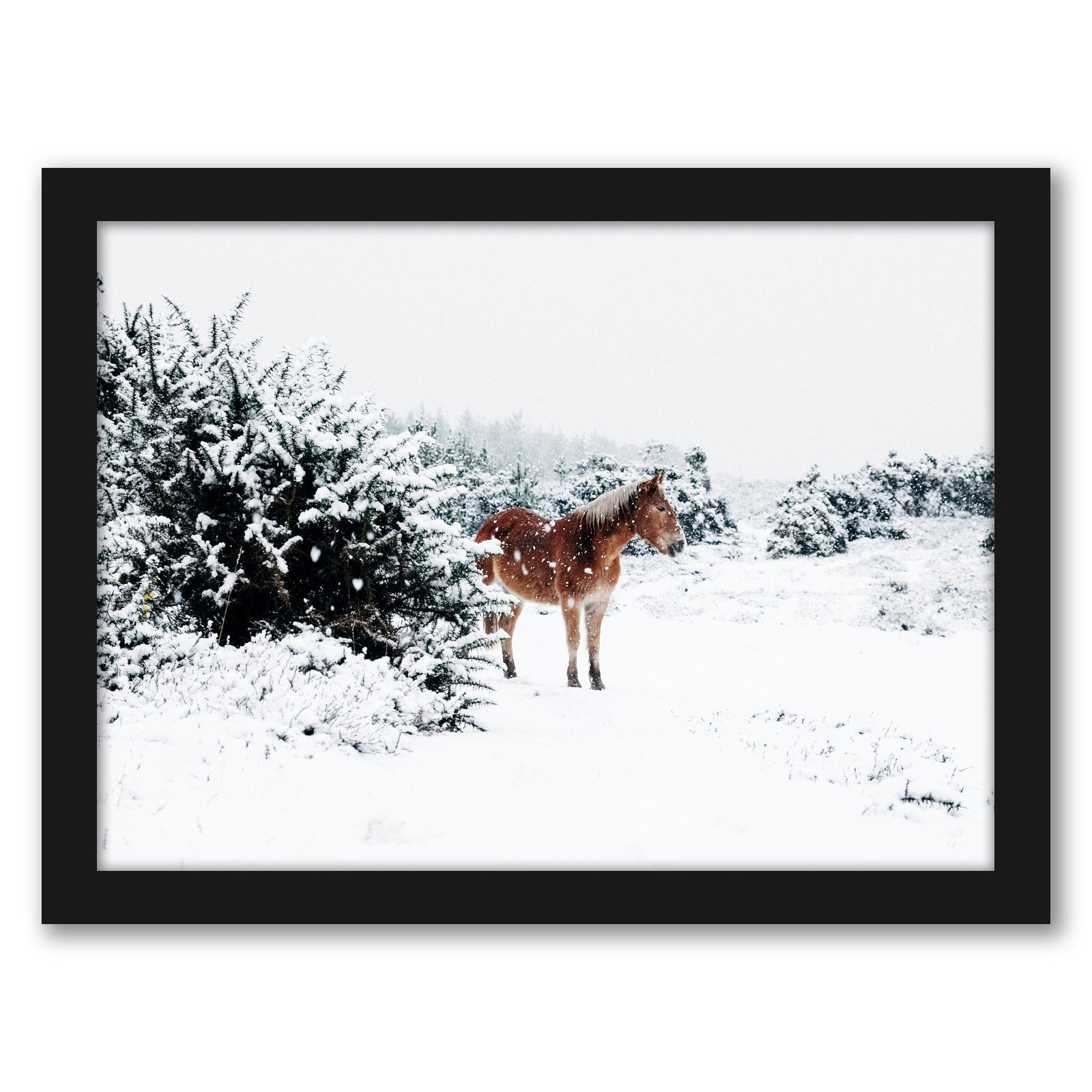 Horse In Snow by Tanya Shumkina - Black Framed Print - Wall Art - Americanflat