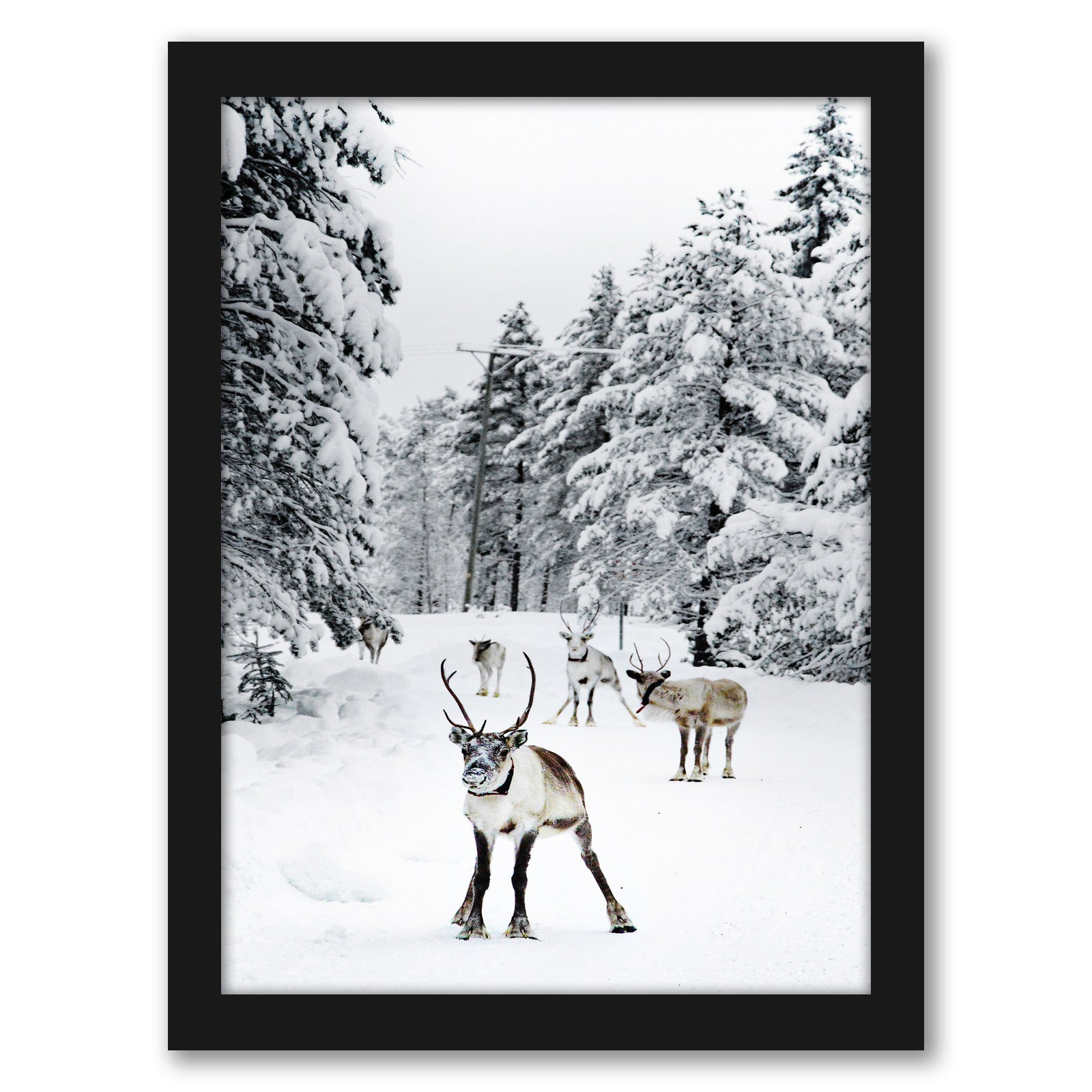 Nature Photo With Moose by Tanya Shumkina - Black Framed Print - Wall Art - Americanflat