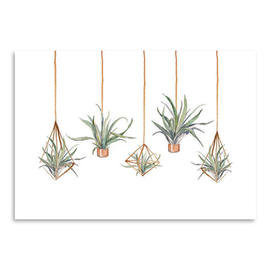 Airplant by Cami Monet - Art Print - Americanflat