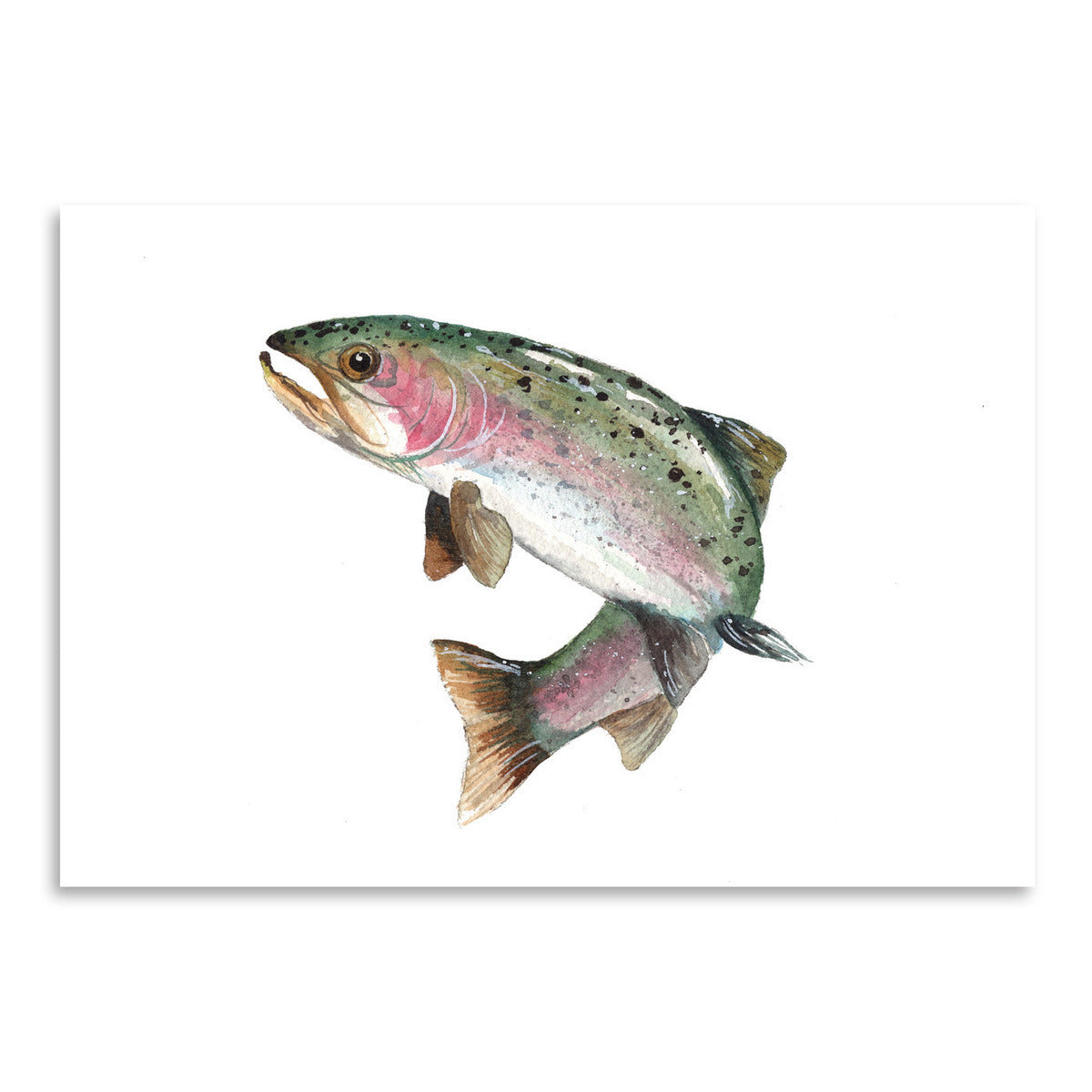 Rainbow Trout by Cami Monet - Art Print - Americanflat