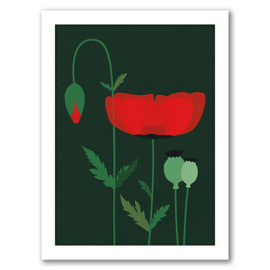 Red Poppy by Rosi Feist - White Framed Print - Wall Art - Americanflat