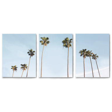 3 Piece Framed Triptych Palms in the Sun by Sisi and Seb