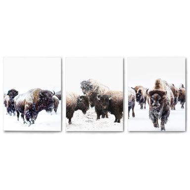 3 Piece Framed Triptych Yellowstone Bison by Tanya Shumkina