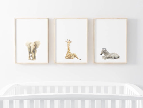 The Safari Trio - Colour Wall Prints