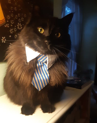 Smart Cat Collar and Tie