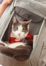 "Load image into Gallery viewer, TRAVEL CAT ""The Navigator"" Convertible Cat Backpack"