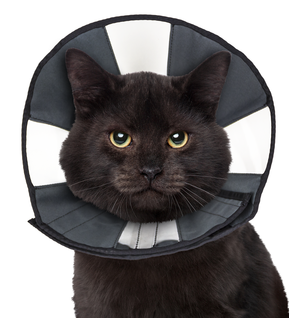 ZENPET Zen Cone Soft Recovery Collar, small