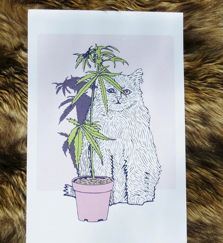 THE 50/50 COMPANY Cannabis Cat Plant 12 x 18, unframed
