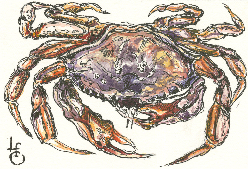 Single Postcard, Dungeness Crab