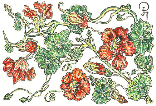 Single Postcard, Spitfire Nasturtium
