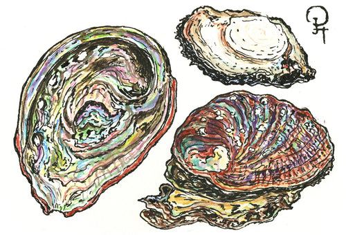 Single Postcard, Monterey Bay Abalone