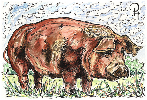 Single Postcard, Heritage Pig