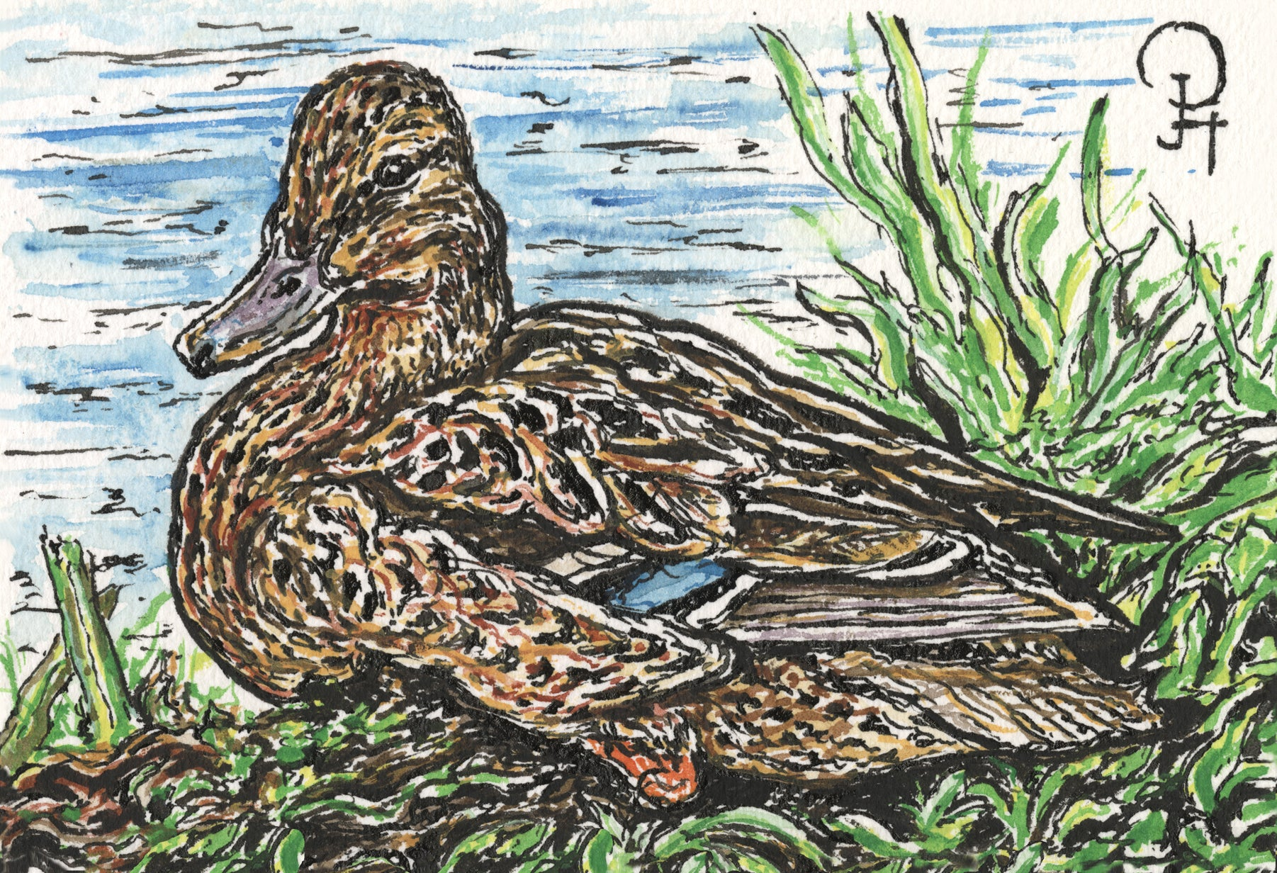 Single Postcard, Mallard Duck