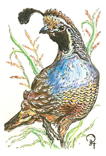 Single Postcard, California Quail