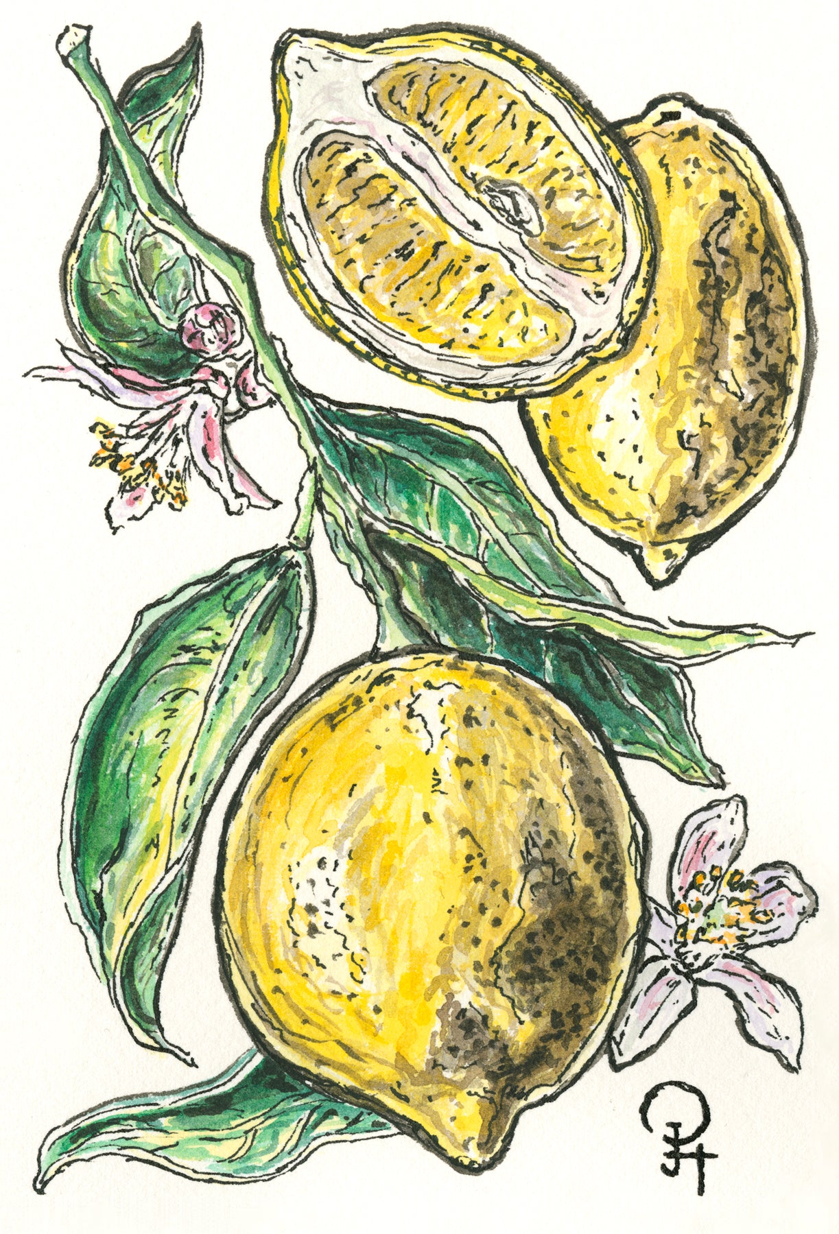 Single Postcard, Meyer Lemon