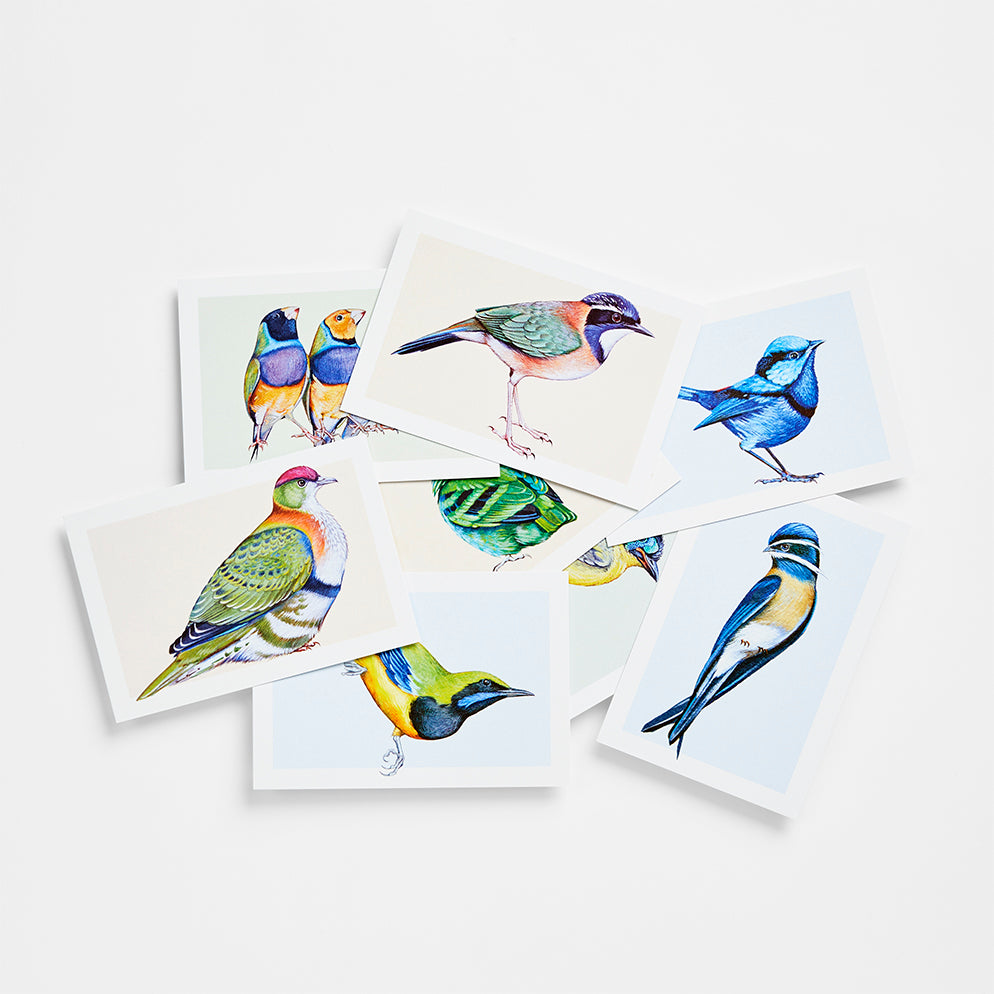 Birds in Color Postcards