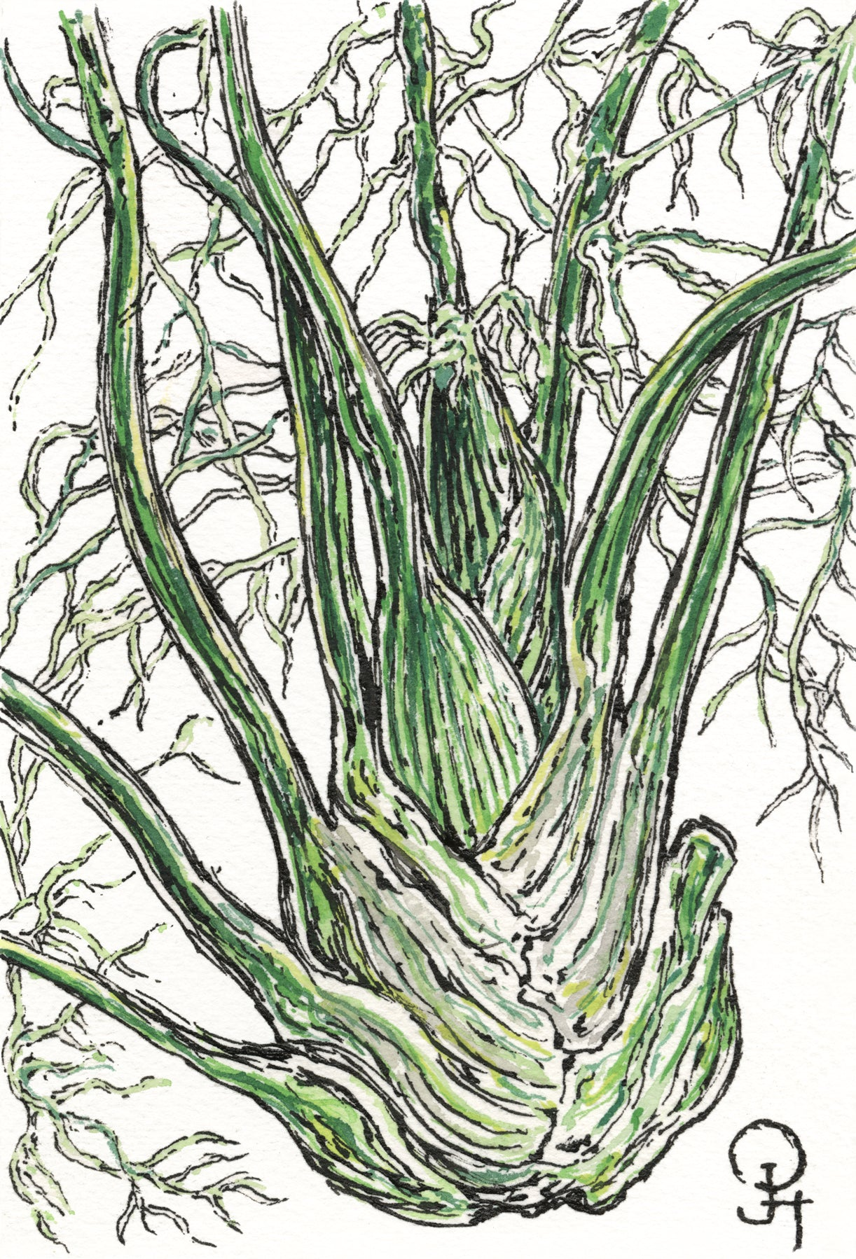 Single Postcard, Farm Fresh Fennel
