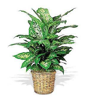 Florist's Choice Green Plant