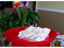Load image into Gallery viewer, Kefir Fermenter: Curd and Whey Separator 1.0 L (34 Oz) with Kefir Grains (20g) in Cage.
