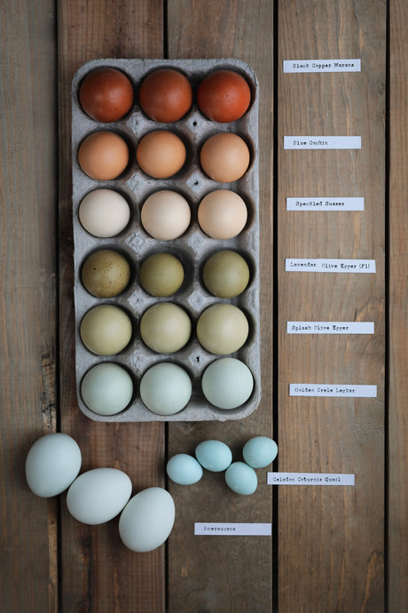 The Science Behind Egg Color