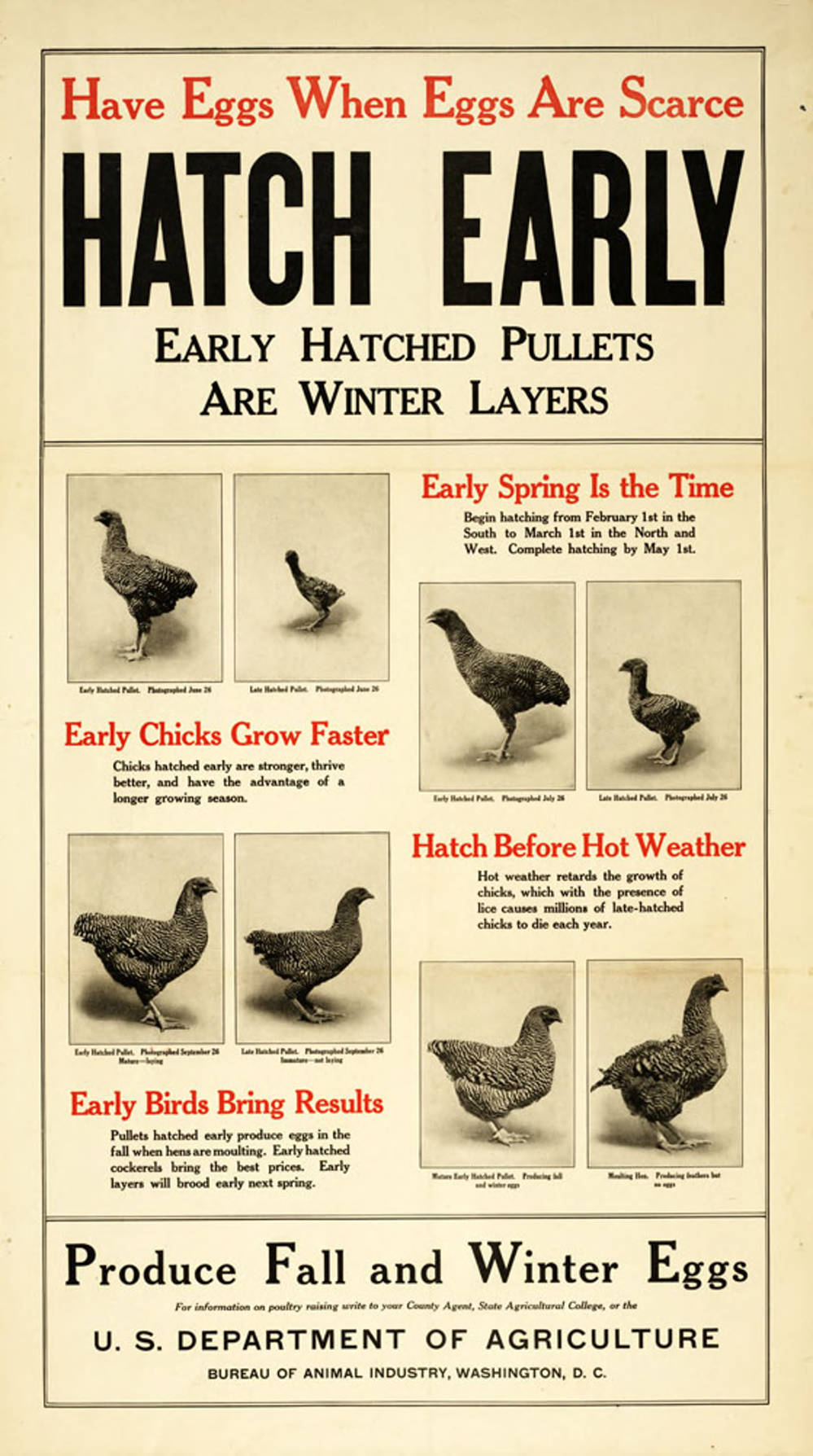 Hatch Early, Early Hatched Pullets Are Winter Layers, Department of Agriculture