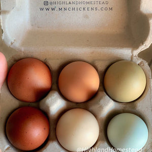 Rainbow Egg Collections