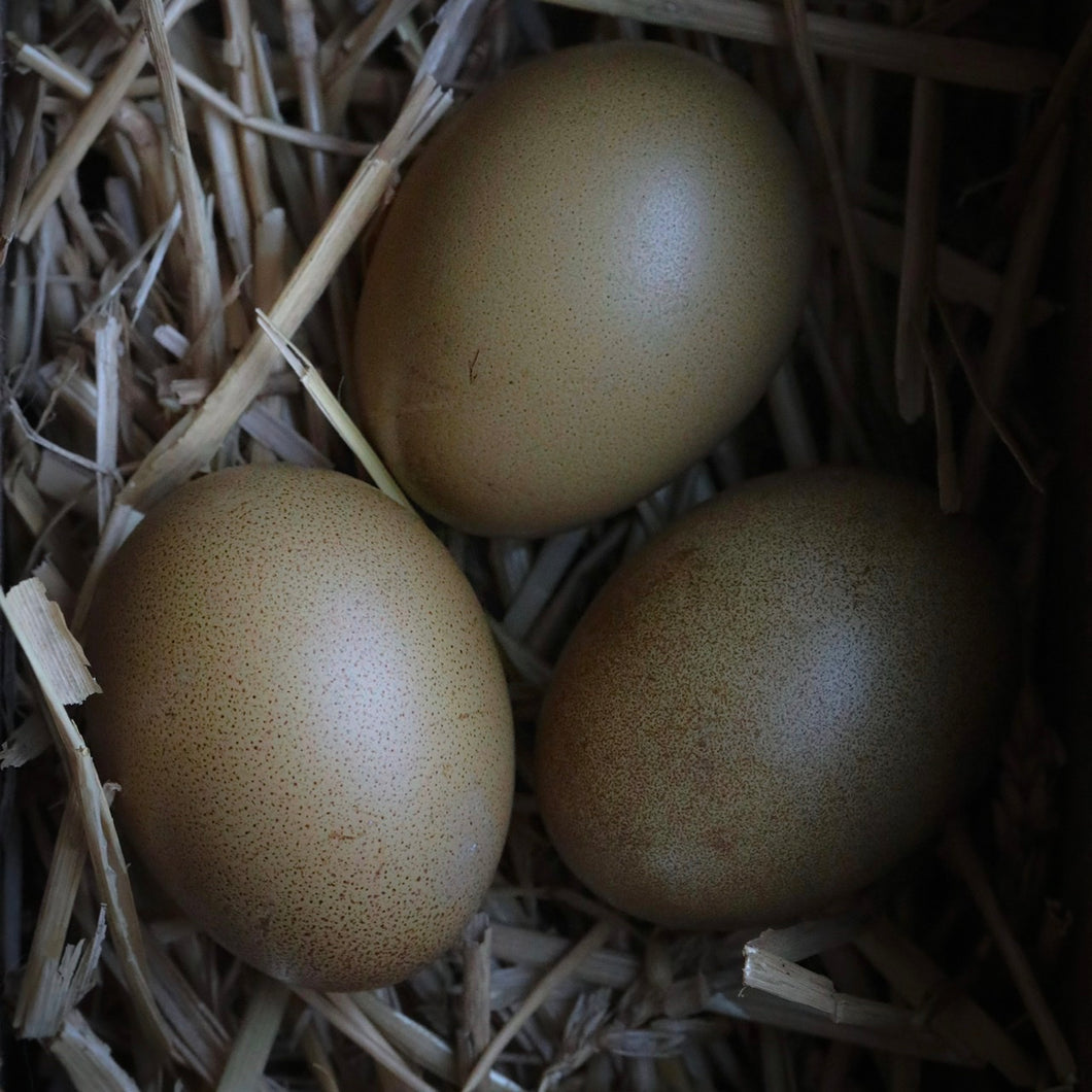 Olive Egger Hatching Eggs