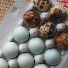 Load image into Gallery viewer, celadon coturnix quail eggs