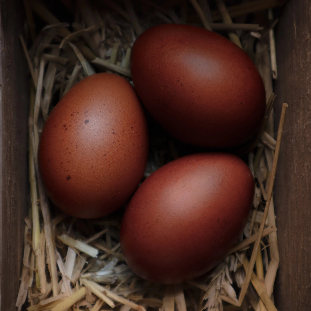 Marans Hatching Eggs