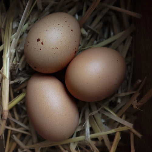 55 Flowery Hatching Eggs NPIP Certified Auto-Sexing 12