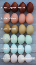 Load image into Gallery viewer, Rainbow Egg Collections