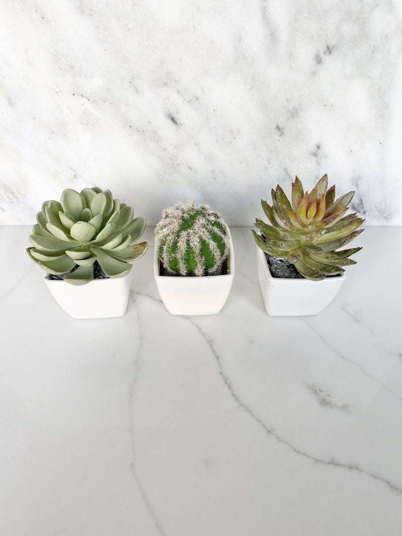 , Cactus Favor, Succulent Place Card Holder, Cactus Birthday Favor Succulent, Shower Favor, Wedding Favor Cactus