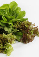 Lettuce Mixed Greens. Replacement for crystal, romaine or iceberg lettuce. Farm to Door Delivery.