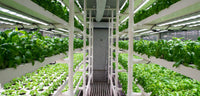 Pioneer Indoor, Urban Farm: Zero-pesticide, Post-Organic Hydroponic Produce. Cleanest & Highest Quality Available Greens, Always Fresh, Farm to Door Delivery